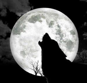 lupo-e-piena-luna